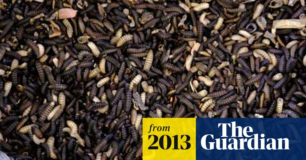 Plan to rear flies on industrial scale for making fish food