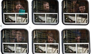 detainees from the environmental group Greenpeace in Russia