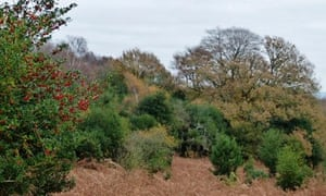 Country Diary : Autumn scene at New Forest