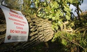 fallen tree following St Jude storm, Saint Jude storm,