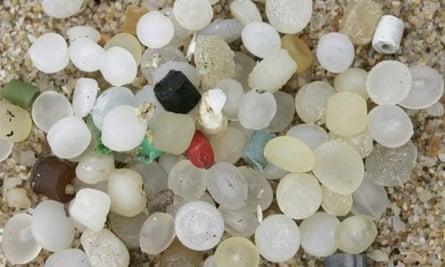 Micro plastic waste and lug worm, blow lug, lugworm