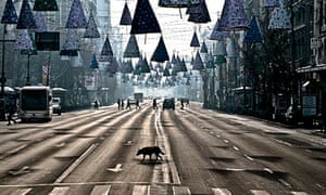 MDG : A stray dog takes advantage of the low traffic to cross a boulevard in Bucharest, Romania