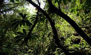 The Oxapampa-Ashaninka-Yanesha UNESCO biosphere reserve in central Peru