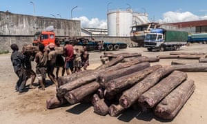 illegal logging and  wood trade in Madagascar : rosewood port of Toamasina ( Tamatave )