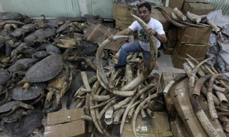 Corruption among wildlife rangers : Illegal Ivory trade coming from Tanzania in Philippines