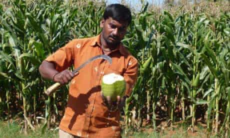 MDG : Chopping coconut in Karnataka, India