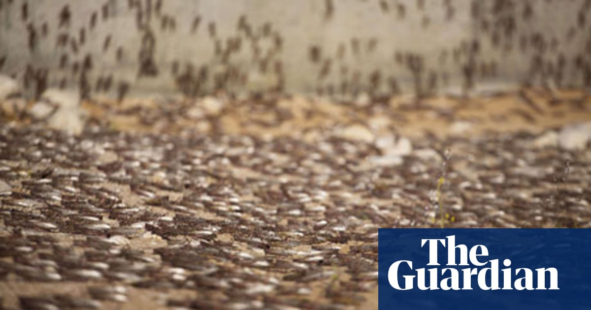 Locust plagues point to grim future of climate change