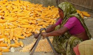 MDG : Empowering women farmers : Shouhardo programme run by the NGO Care in Bangladesh