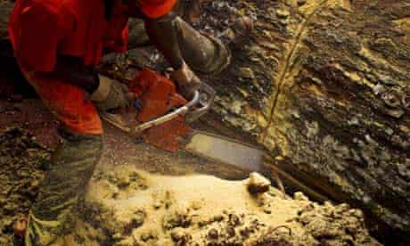 MDG : Logging in Cameroon : FSC sustainable logging in the Kika region