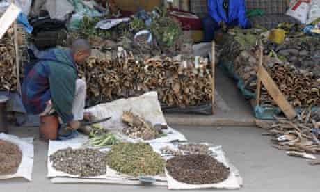 MDG : Nagoya protocol : indigenous medicine : traditional Zulu medicine