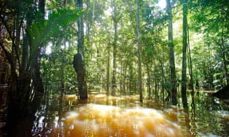 Peru blog : Rainforest in Marasha Reserve, Amazon River Basin, Peru