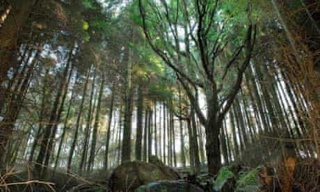 the Woodland Trust aims to return conifer plantations to their original native woodland state