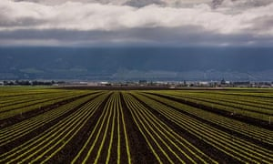 Exploring the Historic Salinas Valley in California : lettuce field