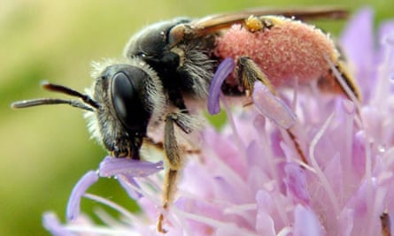 UK bees and bumblebees