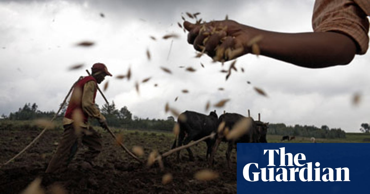 GM crops won't help African farmers | Million Belay and Ruth