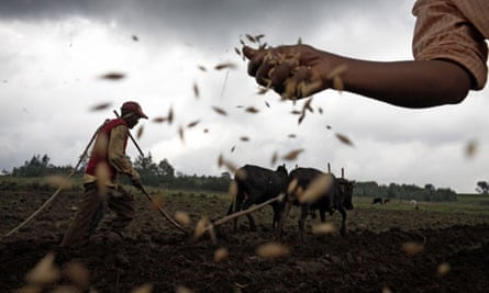 MDG : Seed and GM in Africa : Plowing a field and sowing seeds in Ethiopia