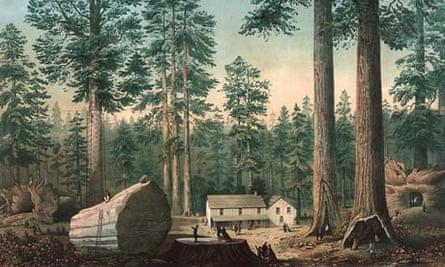 Leo blog on mammoth tree : in Calaveras County