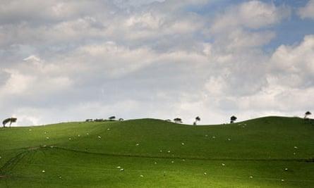 Landscape in Cymru ( Wales ) : green fields with sheep