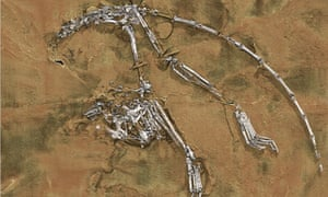 oldest nearly complete skeleton of a primate known as Archicebus achilles