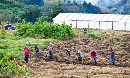 MDG : El Salvador agriculture : Field work, Canton Las Pilas, San Ignacio, Chaltenango