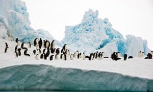 Antarctic marine sanctuaries : Adelie and emperor penguins, Bay of Whales, Ross Sea, Antarctica