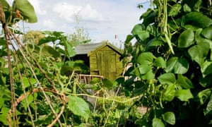 Country Diary : Shed on an allotment site