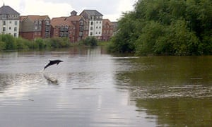 A dophin been spotted in river Dee in Chester