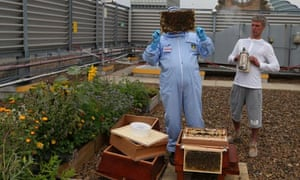 Bez, former member of Manchester band the Happy Mondays promotes urban honey bees in Manchester