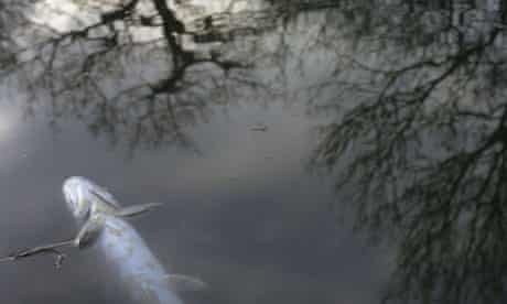 Monbiot blog on Neonicotinoids : A dead pike due to pollution on the River Kennet
