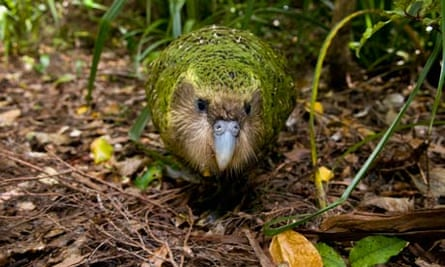 Ugly Animal Preservation Society : Kakapo