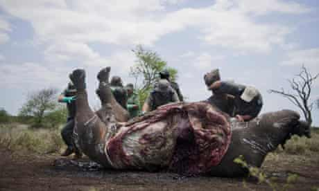 The carcass of one of the two rhinos killed in The Kruger National Park, South Africa