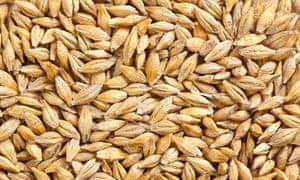 """""""MDG : Ancient cereals quiz : barley grain"""""""