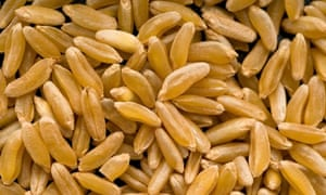 """MDG : Ancient cereals quiz : Grains of Kamut also known as Khorasan wheat"""