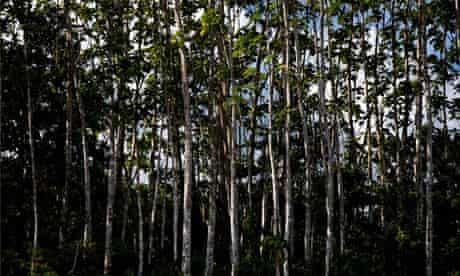 Amazon Rainforest of Peru