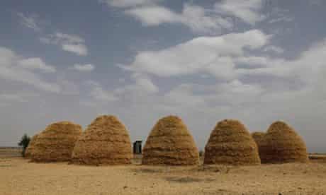 MDG : Mounds of teff grain dry in fields in Ethiopia