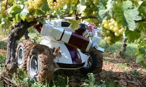 Robot in farming : wine bot being used in vineyards