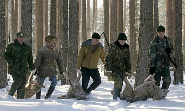 Carnivore extermination damaging ecosystems : hunters drag wolves they killed, Belarus