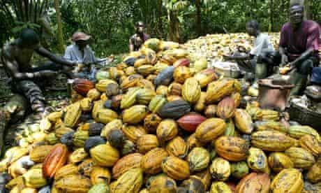 MDG : Ivorian farmers break cocoa nuts in Agboville