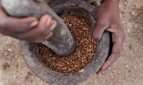 MDG : Teff is ground to make flour for injera, a yeast-risen flatbread popular in Ethiopia