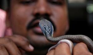 MDG : A snake handler holds an Indian baby cobra hatchling