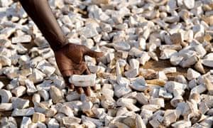 MDG cassava in Uganda