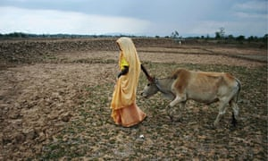 MDG : A woman in India walks with her cow