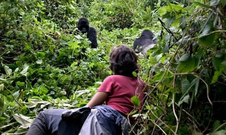 MDG : A holidaymaker has a close encounter with a mountain gorilla in Rwanda