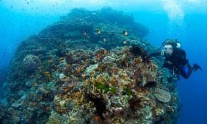 Sylvia Earle coral