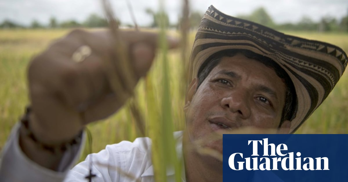 Colombia rice growers saved from ruin after being told not