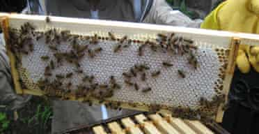 A frame from a bee hive