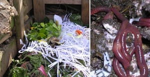 Jane Perrone's compost heap (montage)