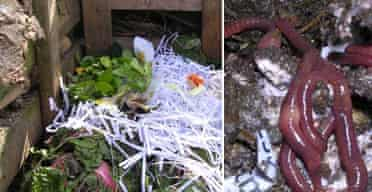 Jane Perrone's compost heap (montage)