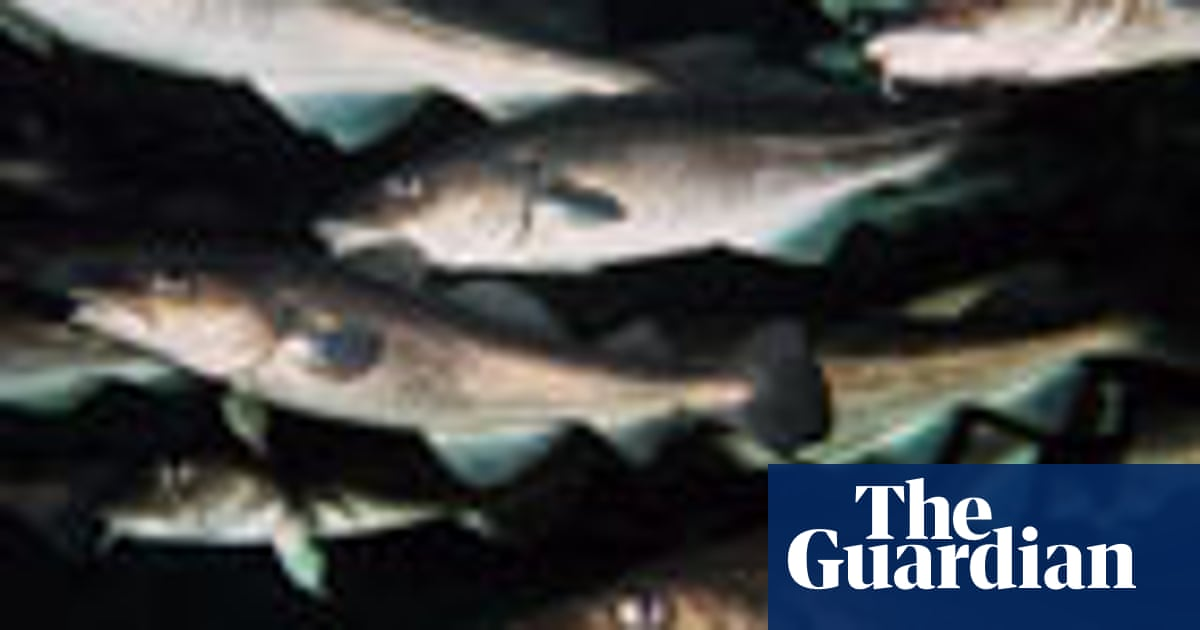 Quiz Do You Know Your Sea Fish Global The Guardian