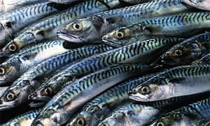 Fish: Mackerel
